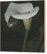 Lily Wood Print by Elery Oxford