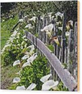 Lily Fence Wood Print