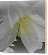 Lily Focal Wood Print