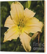 Lily For A Day Wood Print