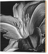 Lily In Black In White Wood Print