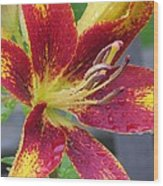 Lily In My Patio Wood Print