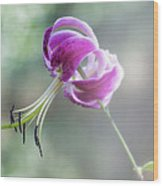 Lily In The Mist Wood Print by Jill Balsam