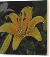 Lily In The Rain Wood Print