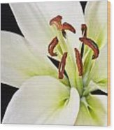 Lily In Winter Wood Print