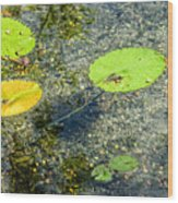 Lily Leafs On The Water Wood Print