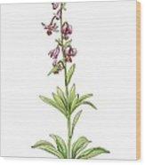 Lily (lilium Martagon) In Flower, Wood Print