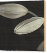 Lily Mystery Wood Print