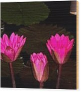 Lily Night Time Wood Print