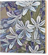 Lily Of The Nile Wood Print