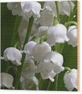 Lily Of The Valley 3 Wood Print