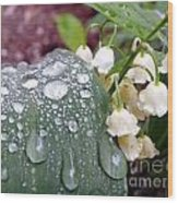 Lily Of The Valley After The Rain Wood Print