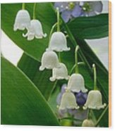 Lily Of The Valley Green Wood Print