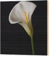 Lily On Black Wood Print