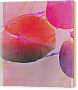 Lily Pad 3 Wood Print