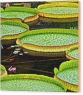 Lily Pad Pond Wood Print