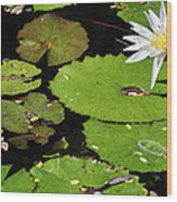 Lily Pads And Lotus Flower Wood Print
