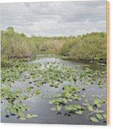 Lily Pads Floating On Water, Anhinga Wood Print