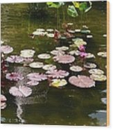 Lily Pads In The Fountain Wood Print