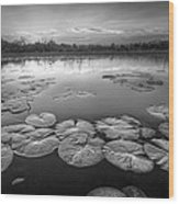 Lily Pads In The Glades Black And White Wood Print
