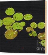 Lily Pads Wood Print