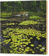Lily Pads On Lake Wood Print