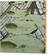 Lily Pads With Reflection Of Conservatory Roof Wood Print
