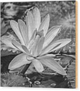 Lily Petals - Bw Wood Print