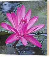 Lily Petals Wood Print