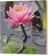 Lily Pink Wood Print