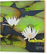 Lily Pond Bristol Rhode Island Wood Print