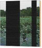 Lily Pond Tri Panel A Wood Print