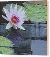 Lily Purple And White Wood Print