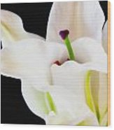 Lily Solitaire Wood Print