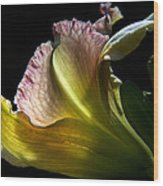 Lily Study I Wood Print by Michael Friedman