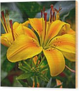 Lily Sunshine Wood Print