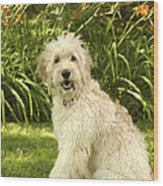 Lily The Goldendoodle With Daylilies Wood Print