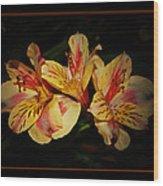 Lily Trio Wood Print