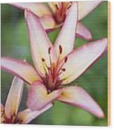 Lily One Wood Print