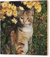 Lily With Harvest Mums Wood Print