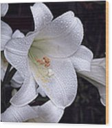 Lily With Rain Droplets Wood Print