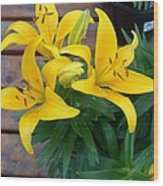 Lily Yellow Flower Wood Print