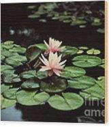 Lilypad And Lotus Wood Print