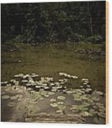Lilypads At The Dock Wood Print