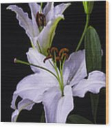 Lily's In Bloom Wood Print