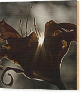 Lily's Light Wood Print