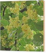 Lime Trees In Bloom  Wood Print