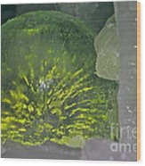 Limon Arcs Wood Print
