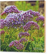 Limonium - Statice Wood Print by Artist and Photographer Laura Wrede