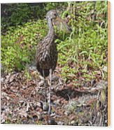 Limpkin And Apple Snails Wood Print